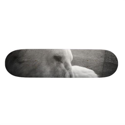 Sleeping Polarbear Skate Board