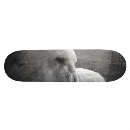 Sleeping Polarbear Skate Board Decks