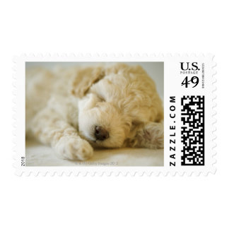 Sleeping Poodle puppy 2 Postage