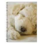Sleeping Poodle puppy 2 Spiral Notebook