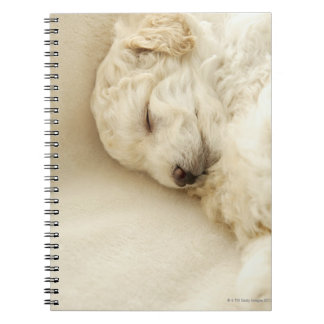 Sleeping Poodle puppy Notebook