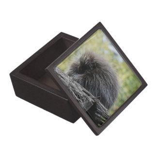 Sleeping Porcupine Premium Gift Box
