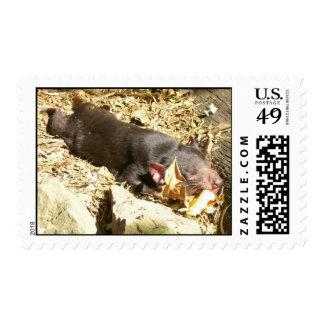Sleeping Postage Stamp