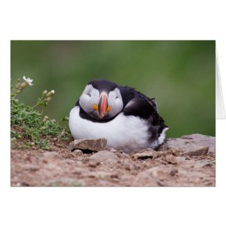 Sleeping Puffin Greeting Cards