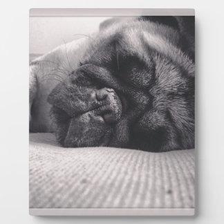 Sleeping Pug Display Plaques