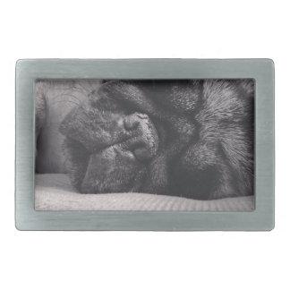 Sleeping Pug Rectangular Belt Buckles