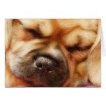 Sleeping Pugalier Puppy Close up Card