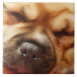 Sleeping Pugalier Puppy Close up Ceramic Tiles