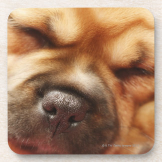 Sleeping Pugalier Puppy Close up Drink Coaster