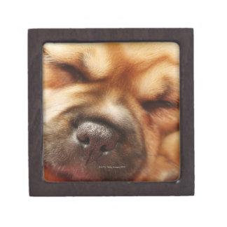 Sleeping Pugalier Puppy Close up Jewelry Box