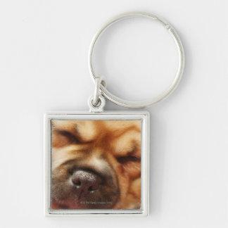 Sleeping Pugalier Puppy Close up Keychain