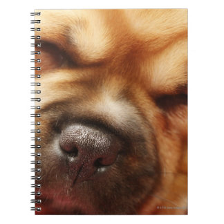 Sleeping Pugalier Puppy Close up Notebook