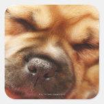 Sleeping Pugalier Puppy Close up Stickers