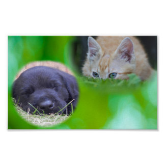Sleeping Pup Spying Cat Poster