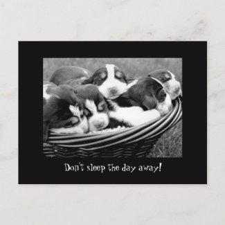 Sleeping Puppies Customizable Text Postcard