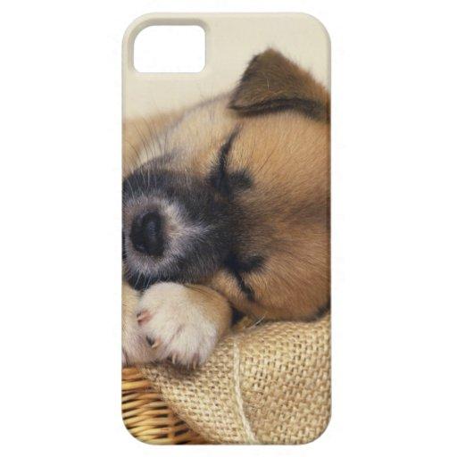 Sleeping Puppy iPhone 5 Cases : Zazzle
