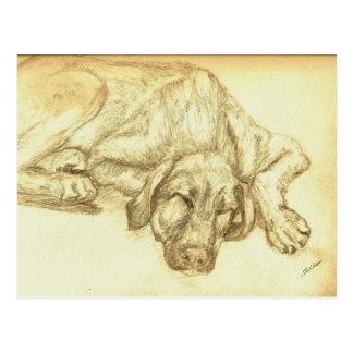 Sleeping Puppy Irish Wolfhound Postcard