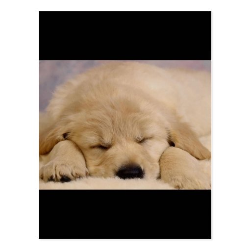 Sleeping Puppy Post Cards