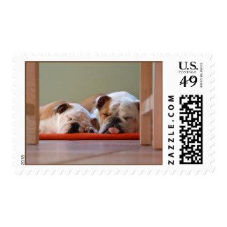 Sleeping pups postage stamp