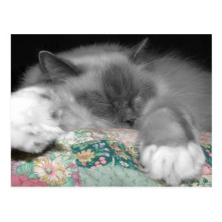 Sleeping Ragdoll Post Cards