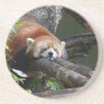 Sleeping Red Panda  Coaster