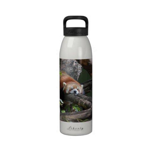Sleeping Red Panda Water Bottle