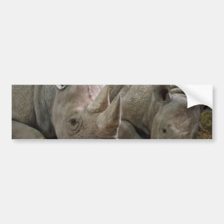 Sleeping Rhinos Bumper Stickers