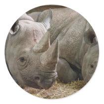 Sleeping Rhinos Stickers