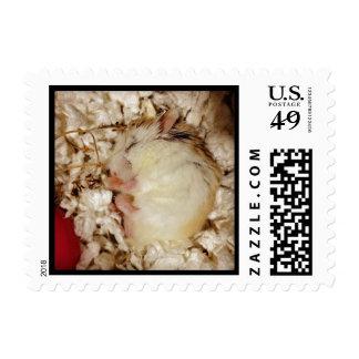 Sleeping Roborovski Hamster Postage Stamp