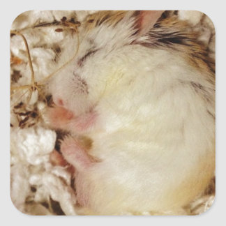 Sleeping Roborovski Hamster Square Sticker