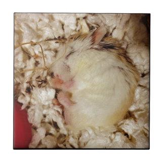 Sleeping Roborovski Hamster Ceramic Tiles