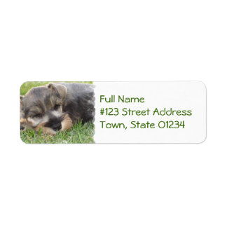 Sleeping Schnauzer Dog Mailing Label