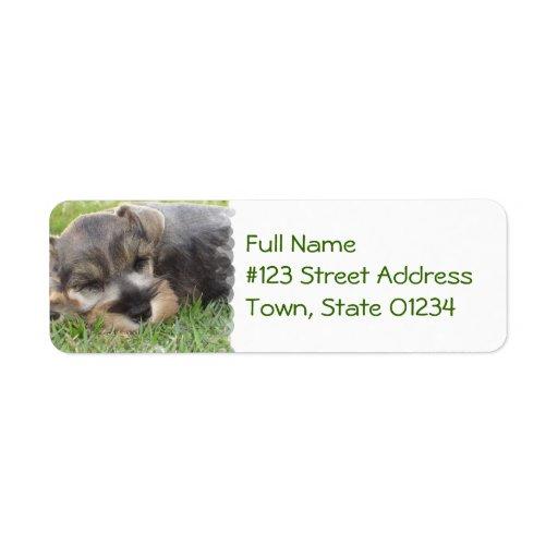 Sleeping Schnauzer Dog Mailing Label