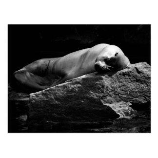 Sleeping Sea Lion .1778 Postcard