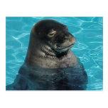 """""""SLEEPING SEAL"""" POST CARD"""