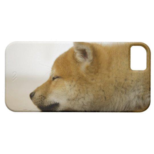 Sleeping Shiba-ken 3 iPhone SE/5/5s Case