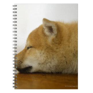 Sleeping Shiba-ken 3 Spiral Notebook