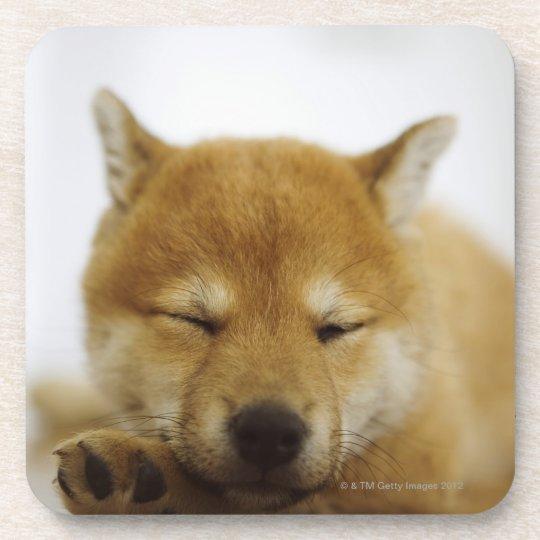 Sleeping Shiba-ken Beverage Coaster