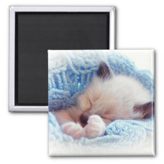 Sleeping Siamese Kitten Paws 2 Inch Square Magnet