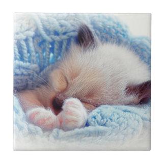 Sleeping Siamese Kitten Paws Tiles