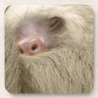 sleeping sloth drink coaster