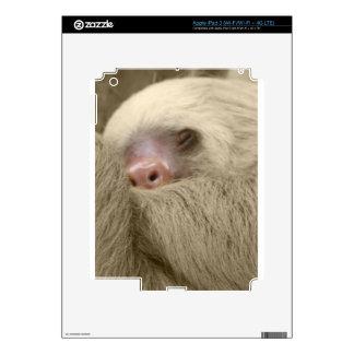 sleeping sloth iPad 3 skins