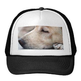 Sleeping soundly baseball hat