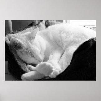 Sleeping Squeak Poster
