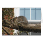 Sleeping Squirrel Stationery Note Card