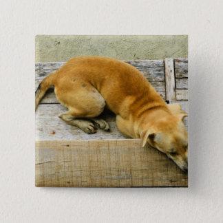 Sleeping street dog in Thailand Button