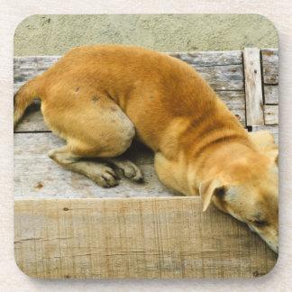 Sleeping street dog in Thailand Drink Coasters
