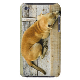 Sleeping street dog in Thailand iPod Touch Case