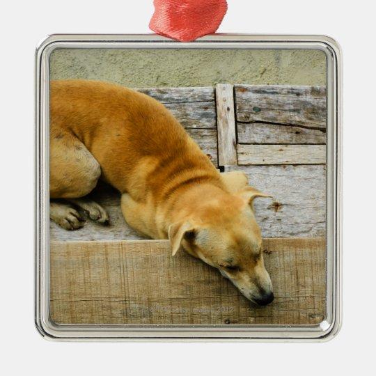 Sleeping street dog in Thailand Metal Ornament