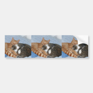 Sleeping Sweeties Bumper Sticker